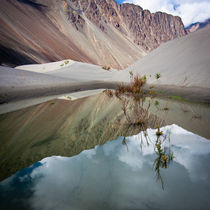 Sand Dunes Of Nubra Valley. Himalaya. Ladakh by perfectlazybones