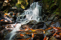 Waterfall In Rain Forest by perfectlazybones