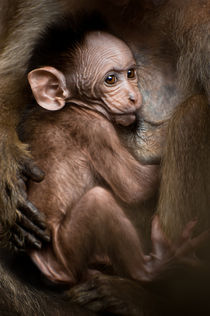 'Baby Monkey' by perfectlazybones
