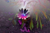 Blumenbild im Traum von Ingrid Eichhorst