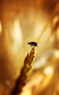 Little beetle von Gealt Waterlander