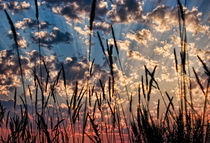 Sunset Through the Grasses von Don Schwartz