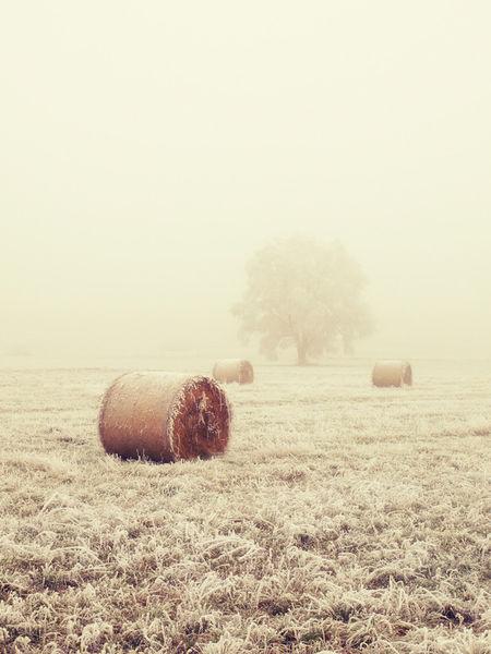 Fog-field-hr