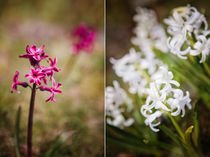 Flowers Duet: Pink and White by olgasart