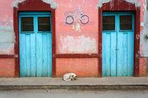 Sleeping Dog Mexico von John Mitchell