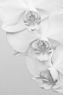 Orchid by perfectlazybones