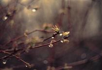 Rain. by Ekaterina Planina
