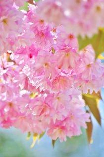 Pink Spring by AD DESIGN Photo + PhotoArt