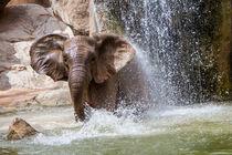 Elephant by NINA PETERKA