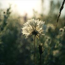 sunrise colors – blue by Karolina Czochanska