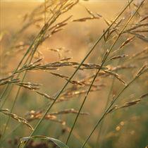 sunrise colors - yellow von Karolina Czochanska