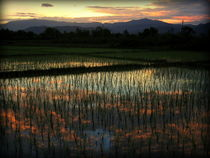 Rice field at sunset von Neung Nukul