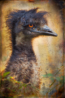 Finer feathered Friends: Emu von Alan Shapiro
