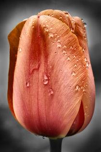 Orange Beauty by royspics