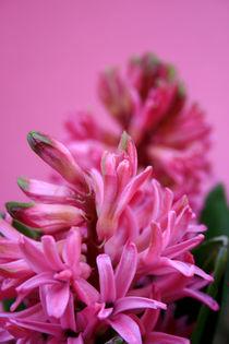 Mal wieder Pink ... von Heidrun Lutz