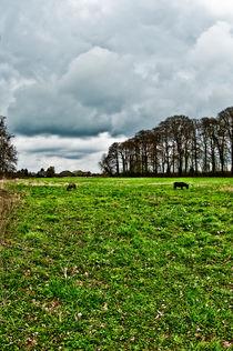 Pasture von Stefan Antoni - StefAntoni.nl