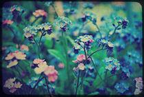 Pink & Blue Forget-me-nots von rosanna zavanaiu