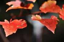 orange leafs von digidreamgrafix