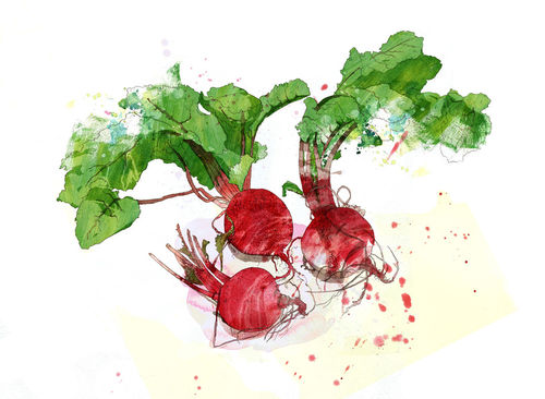 Red-beet