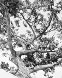 Tree von perfectlazybones