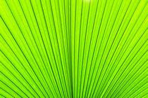 Palm tree leaf von perfectlazybones