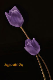 A MOTHER'S DAY WISH von tomyork