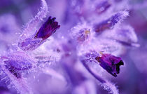 purple flower von evgeny bashta