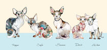 sphynx family 3 by Sara Ligari