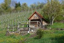 Vinyard in Spring von alina8