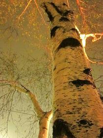 White Birch Stood Still by Guy  Ricketts