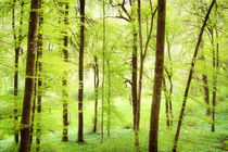 Wald im Frühling - wunderschönes helles grün by Matthias Hauser