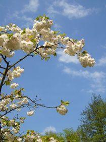 Blütenzweig by Ulrike Kröll