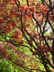 Farbenpracht Natur von Ulrike Kröll