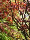 Farbenpracht-natur-p1050482
