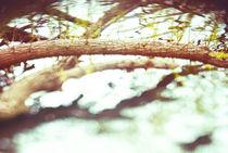 Falling Nowhere by Lauren Wuornos