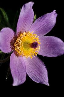 Im Inneren der Blüte von Bastian  Kienitz