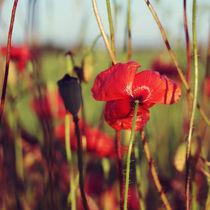 red summer by Karolina Czochanska