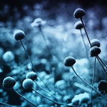 Solitary Moon von Akin Khan