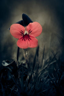 Thinking Pansy by loriental-photography