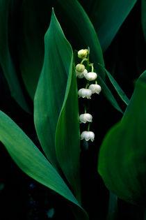 Pearls & Furls 398 von Patrick O'Leary