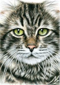 Katzengesicht - Cats Face von Nicole Zeug