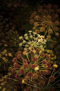 Floral Fireworks #02 von loriental-photography