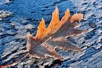 Last Sign of Winter by Keld Bach