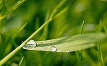 Regenwetter von Barbara  Keichel