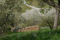 Orchard Meadow von alina8