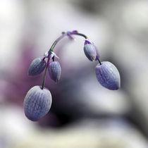 Blütenbild von Jens Berger