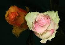 Rosen auf dunklen Grund von Egon Rathke
