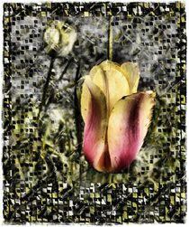 Tulpenspierei von Silvio Vogel