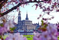 Dresden Panorama Frühling/ Sommer von drachenkind