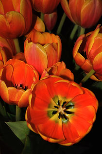Tulips of Fire by Kaye Menner